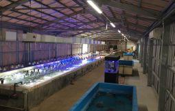 「【浦添市】サンゴの苗作り体験&サンゴ養殖施設見学」のサムネイル画像