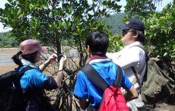 「【竹富町】マングローブ・トレッキング〜海の森マングローブの謎を解く〜」のサムネイル画像