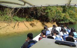 「【嘉手納町】マングローブ遊覧自然・環境・平和学習」のサムネイル画像