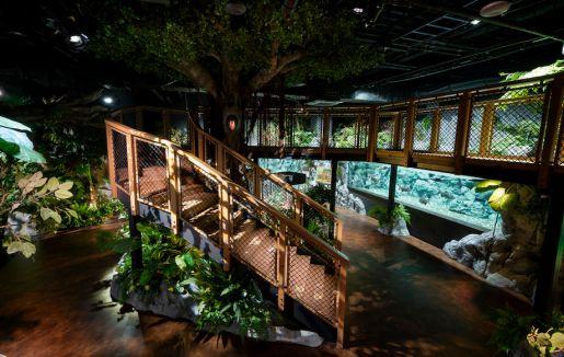「DMMかりゆし水族館」のサムネイル画像