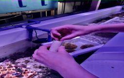 「【豊見城市】【DMMかりゆし水族館】サンゴラボツアー」のサムネイル画像